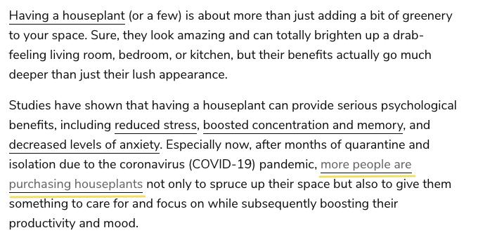 having a houseplant article screenshot